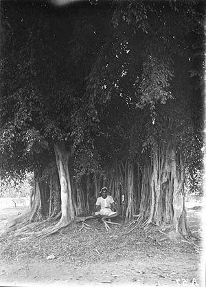Kejawèn - A Javanese man meditating under Banyan tree. Dutch East Indies, before 1940.
