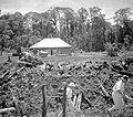 COLLECTIE TROPENMUSEUM Kolonistenwoning Dairi kolonisatie Sumatra's Westkust TMnr 10001419.jpg