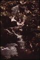 CREEK BESIDE TRAIL UP ALGONQUIN PEAK, IN THE HIGH PEAKS REGION WEST OF LAKE CHAMPLAIN - NARA - 554408.tif