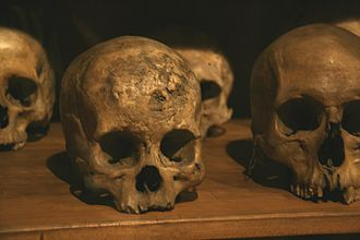 Museo Nacional de Antropología (Madrid) - A collection of skulls from the beginnings of the museum.