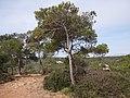 Calvià, Balearic Islands, Spain - panoramio (38).jpg