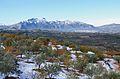 Camp d'oliveres i cireres nevat amb la serra de Mariola al fons, Benialfaquí.JPG