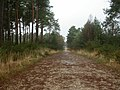 Cannon Hill, forestry road - geograph.org.uk - 1599409.jpg