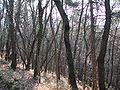 Carpineti mandra bosco ceduo.jpg