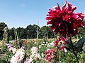 Central Botanic Garden of NASU - panoramio (4).jpg