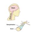Central Nervous System.png