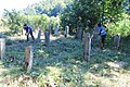 Cer-Voničko groblje (Krivaja) 18. 08. 2019 260.jpg