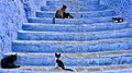 Chefchaouen Cats (232110357).jpeg