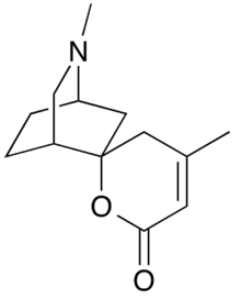Chemical structure of dioscorine.png