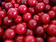 http://upload.wikimedia.org/wikipedia/commons/thumb/6/60/Cherry_plums.jpg/180px-Cherry_plums.jpg