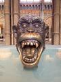 Chimpanzee head sculpture, Natural History Museum, London.png