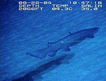 A shark swimming in dark water over sand; the labels indicate that it was taken on August 26, 2004 at a depth of 2866 ft, a temperature of 4.3°C, and a salinity of 35