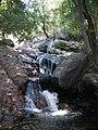 Cipreses (Ranchillo). - panoramio (4).jpg