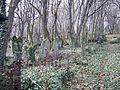 Cmentarz żydowski w Przemyślu 14.JPG
