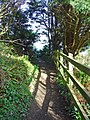 Coastal path, Dinas Island - geograph.org.uk - 1207965.jpg