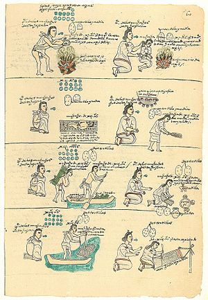 Aztec - Folio from the Codex mendoza showing the rearing and education of Aztec boys and girls, shpowing how they were instructed in different types of labor and how they were punished for misbehavior