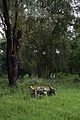 Concrete Bench - Indian Botanic Garden - Howrah 2013-10-27 3820.JPG