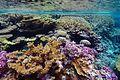 Coral reef 98.jpg