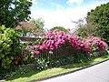 Cottage garden, Coombe Bissett - geograph.org.uk - 871088.jpg