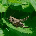 Creepy crawlies 2012 Ausflug an die Jagst (7735148018).jpg