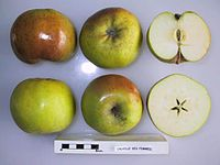 Cross section of Calville des Femmes, National Fruit Collection (acc. 1947-245).jpg