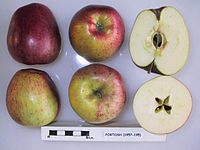 Cross section of Fortosh, National Fruit Collection (acc. 1957-195).jpg