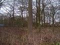 Crow Plantation - geograph.org.uk - 1710123.jpg