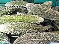 Cucurbitales - Momordica charantia - 5.jpg