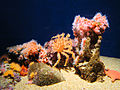 DSC26565, Monterey Bay Aquarium, California, USA (5058330953).jpg
