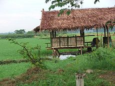 Damara or Farmer's Shed.jpg