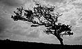 Dartmoor - Combestone Tor (6238291113).jpg
