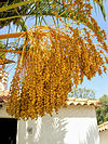 Dates 2005-07-17 Algarve.jpg