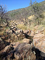 Davis Mountains Preserve 6.JPG