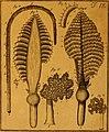 De quibusdam animalibus marinis, eorumque proprietatibus, orbi litterario vel nondum vel minus notis, liber - cum nonnullis tabulis aeri incisis, ab auctore super vivis animalibus delineatis (1761) (20860125245).jpg