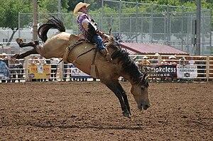 Bucking - Rodeo horse bucking.