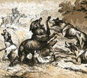 Wolf hunting with dogs - Death struggle (1875), Henry Hope Crealock