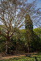 Dehnepark Bäume.jpg