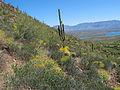 Desert 6 (15746526770).jpg