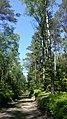 Deutschland Schleswig-Holstein Segeberger Forst Naturwald 1.jpg