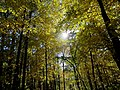 Devils Lake State Park - panoramio (4).jpg