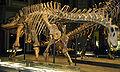 Dicraeosaurus Berlin.jpg