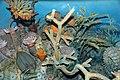 Diorama of a Devonian seafloor - trilobite, Goldringia coiled cephalopod, corals, algae, fenestrate bryozoans, brachiopod (43838404470).jpg