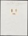 Dipsas catesbyi - kop - 1837 - Print - Iconographia Zoologica - Special Collections University of Amsterdam - UBA01 IZ12000009.tif