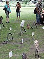 Display of hawks and owls, Russell Square - geograph.org.uk - 463463.jpg