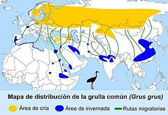 Common crane - Image: Distribución grullas