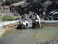 Diversion Dam Removal Improves Habitat for Migrating Fish in Tehama County (15528525650).png