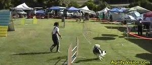 File:Dog-agility-06-05-28-luz-stp.ogv