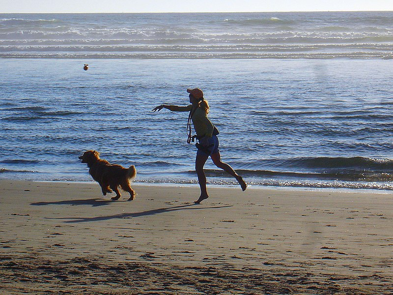 Dog Friendly Beach Houses In North Carolina