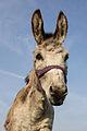Donkey 0002.jpg