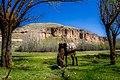Donkey My Friend - panoramio.jpg